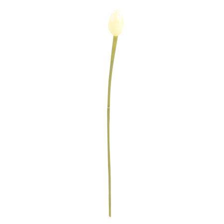 Лале бяло